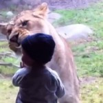 Animals play with Kids and Zoo