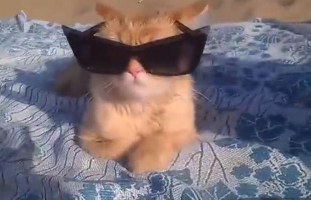 humancat