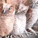 Cute Owl Compilation